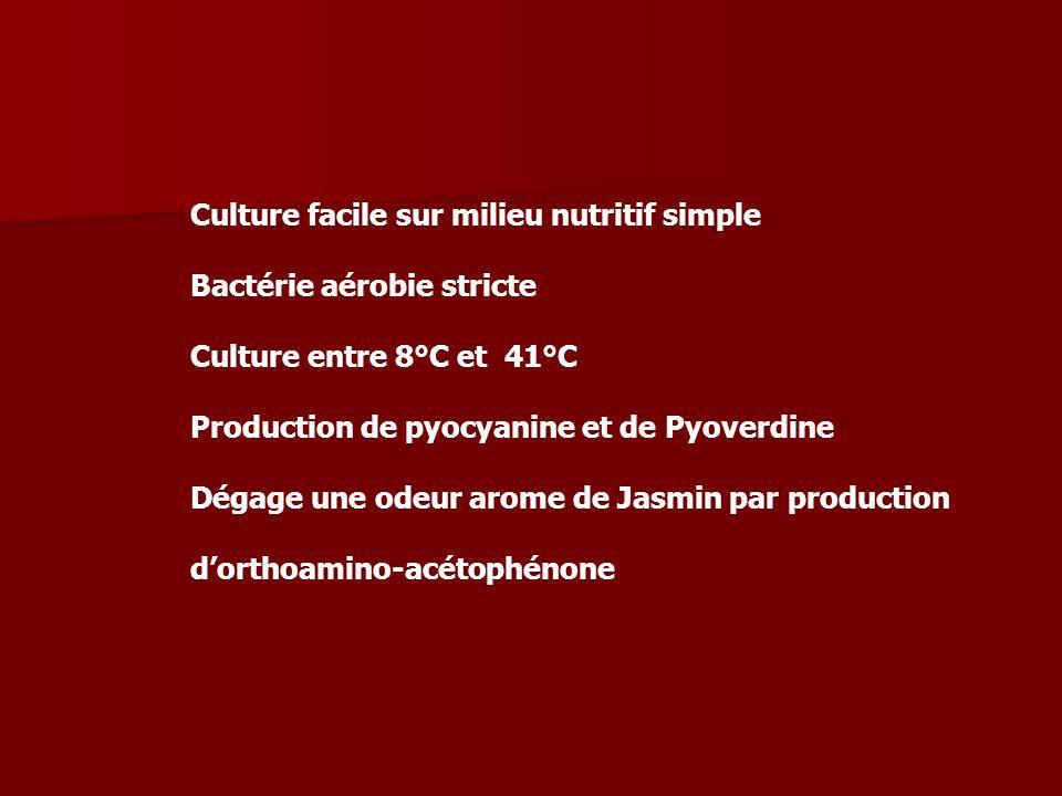 Culture facile sur milieu nutritif simple Bactérie aérobie stricte Culture entre 8°C et 41°C Production de pyocyanine et de Pyoverdine Dégage une odeu