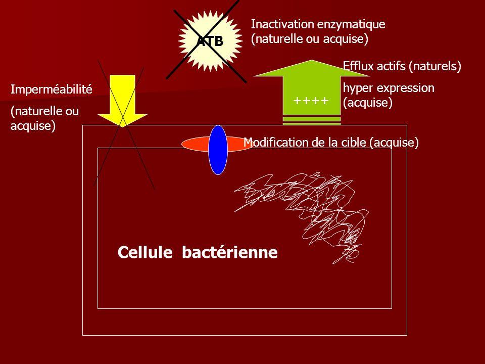 ATB ++++ Inactivation enzymatique (naturelle ou acquise) Efflux actifs (naturels) hyper expression (acquise) Imperméabilité (naturelle ou acquise) Mod
