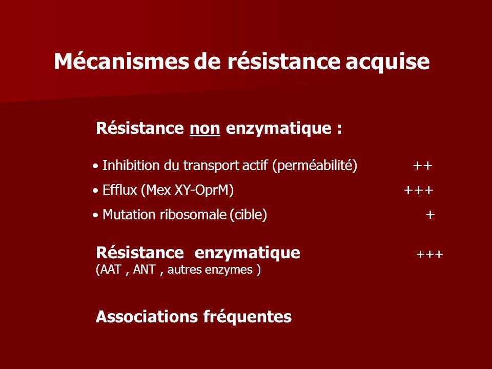 Résistance non enzymatique : Inhibition du transport actif (perméabilité) ++ Efflux (Mex XY-OprM) +++ Mutation ribosomale (cible) + Résistance enzymat