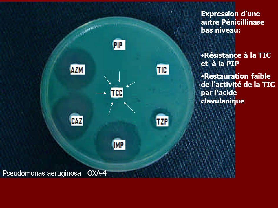 Pseudomonas aeruginosa OXA-4 Expression dune autre Pénicillinase bas niveau: Résistance à la TIC et à la PIP Restauration faible de lactivité de la TI