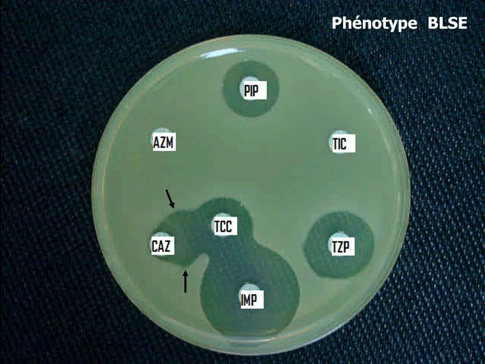 Phénotype BLSE