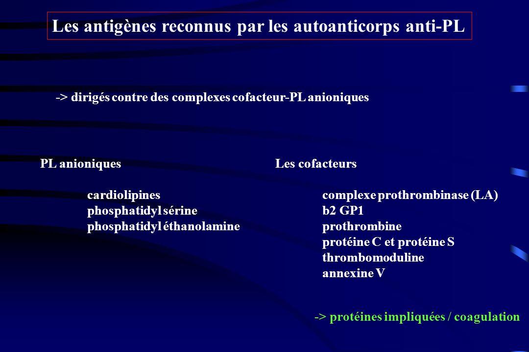 Les antigènes reconnus par les autoanticorps anti-PL -> dirigés contre des complexes cofacteur-PL anioniques PL anioniques cardiolipines phosphatidyl