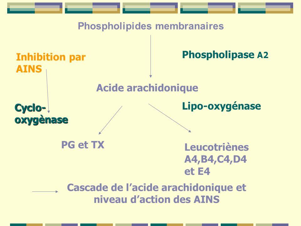 Phospholipides membranaires Phospholipase A2 Acide arachidonique Inhibition par AINS Lipo-oxygénase PG et TX Leucotriènes A4,B4,C4,D4 et E4 Cascade de lacide arachidonique et niveau daction des AINS Cyclo- oxygènase