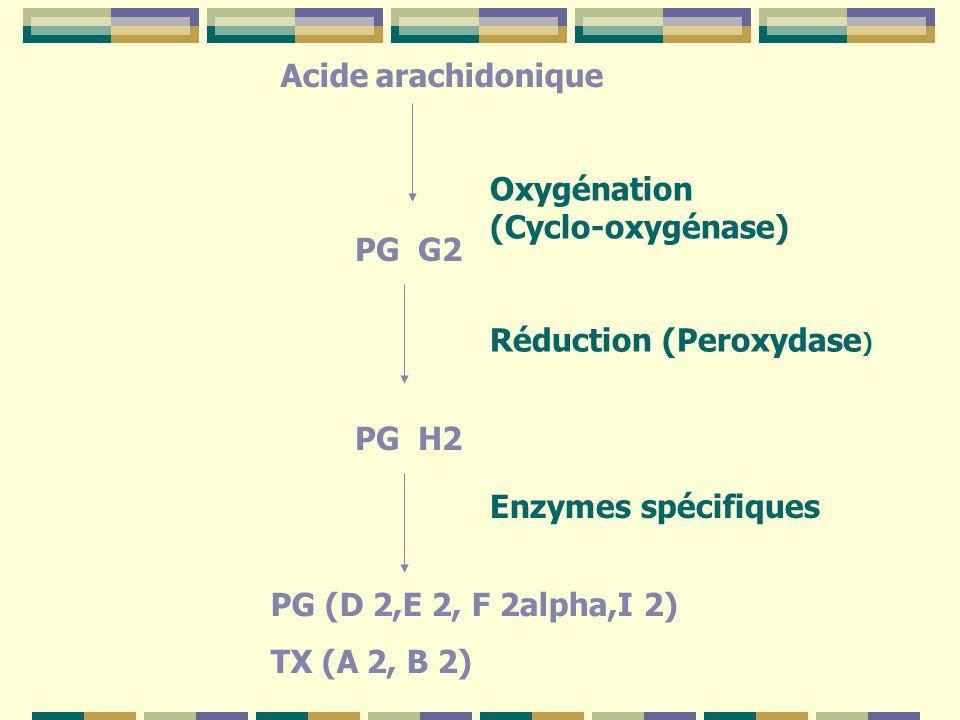 Acide arachidonique Oxygénation (Cyclo-oxygénase) PG G2 PG H2 Enzymes spécifiques PG (D 2,E 2, F 2alpha,I 2) TX (A 2, B 2) Réduction (Peroxydase )