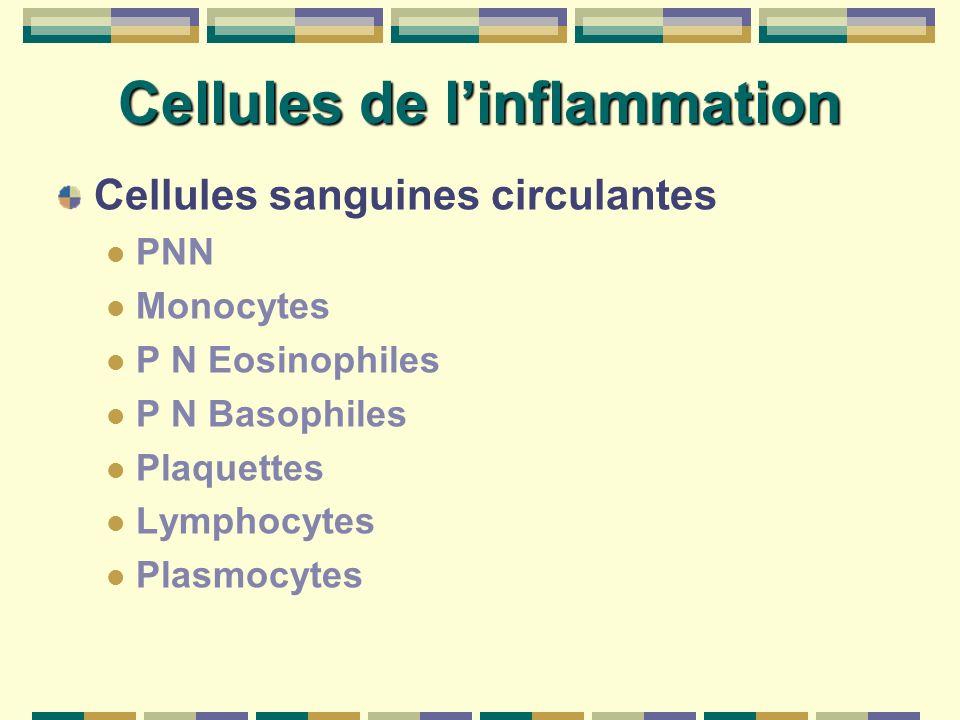 Cellules de linflammation Cellules sanguines circulantes PNN Monocytes P N Eosinophiles P N Basophiles Plaquettes Lymphocytes Plasmocytes