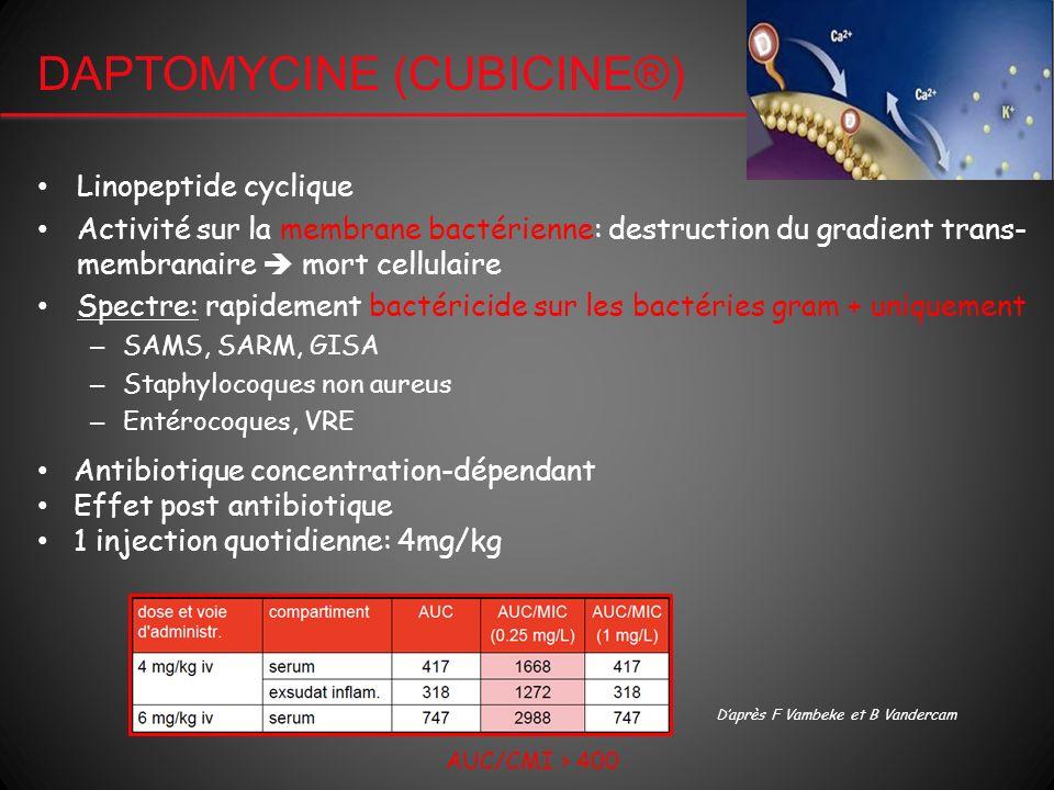 DAPTOMYCINE (CUBICINE®) Linopeptide cyclique Activité sur la membrane bactérienne: destruction du gradient trans- membranaire mort cellulaire Spectre: