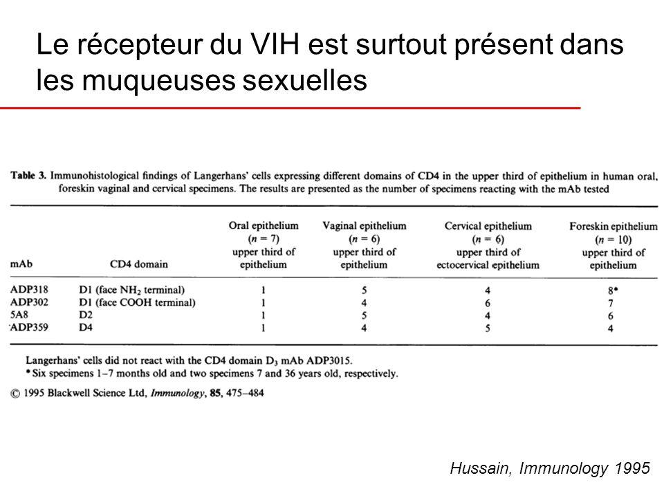 Le récepteur du VIH est surtout présent dans les muqueuses sexuelles Hussain, Immunology 1995