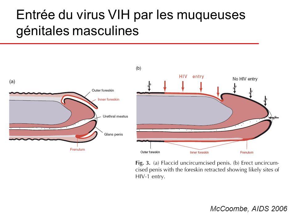 Entrée du virus VIH par les muqueuses génitales masculines McCoombe, AIDS 2006