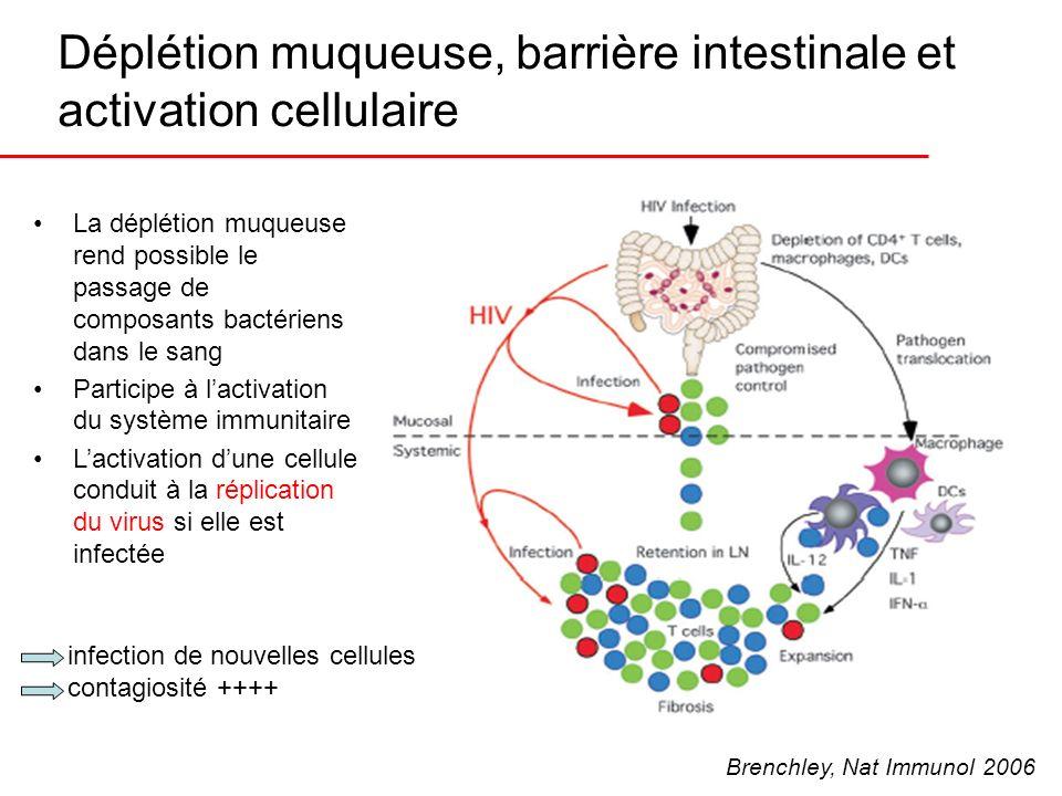 Déplétion muqueuse, barrière intestinale et activation cellulaire La déplétion muqueuse rend possible le passage de composants bactériens dans le sang