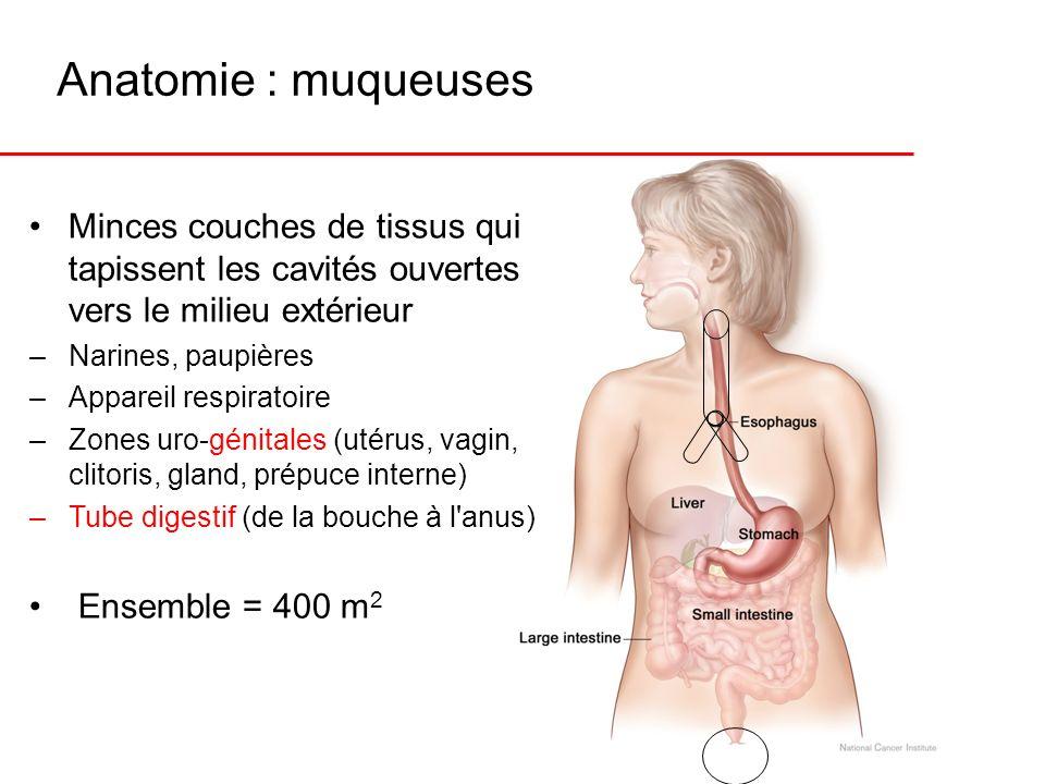 Anatomie : muqueuses Minces couches de tissus qui tapissent les cavités ouvertes vers le milieu extérieur –Narines, paupières –Appareil respiratoire –