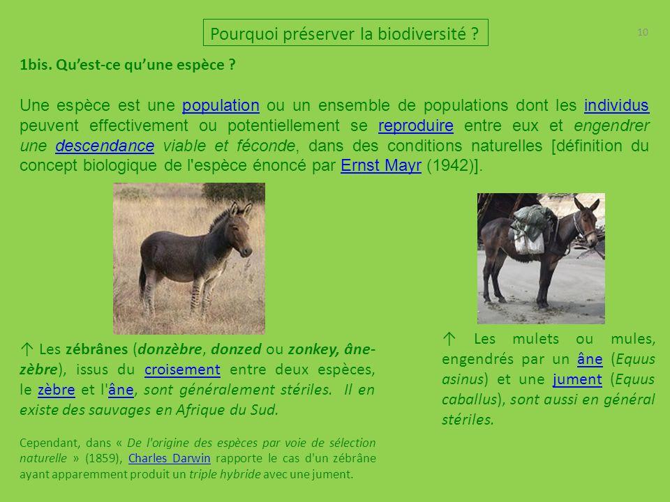 10 Pourquoi préserver la biodiversité .1bis. Quest-ce quune espèce .