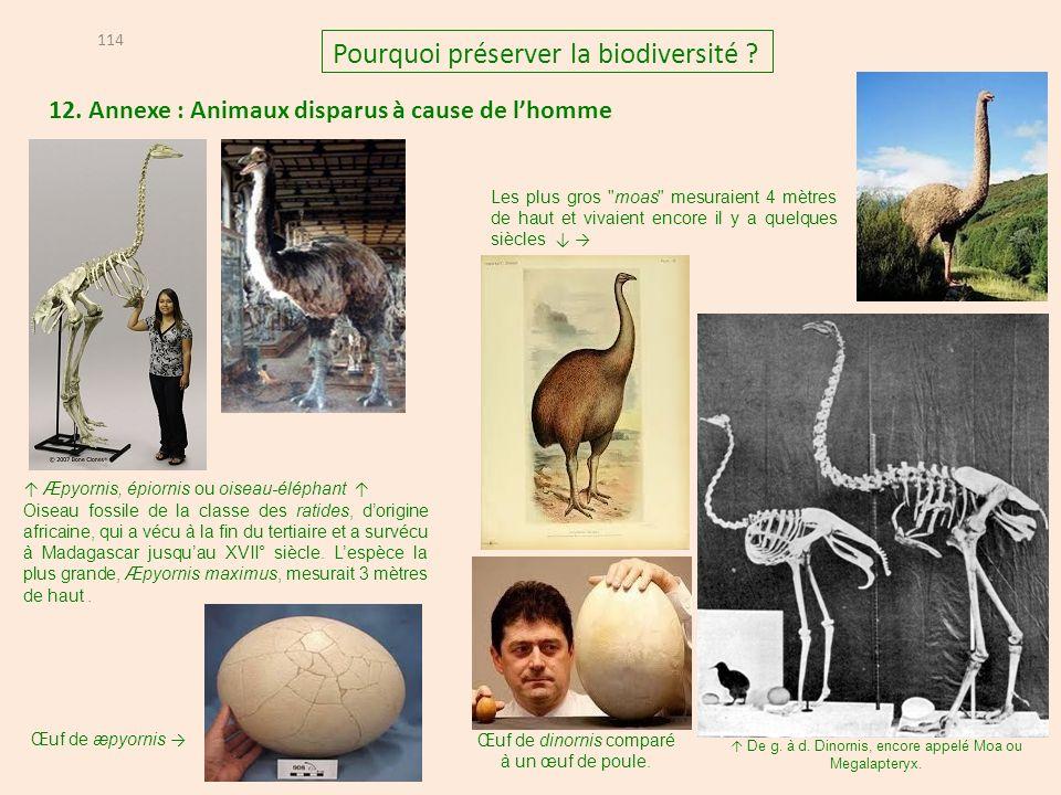 12.Annexe : Animaux disparus à cause de lhomme 114 Pourquoi préserver la biodiversité .