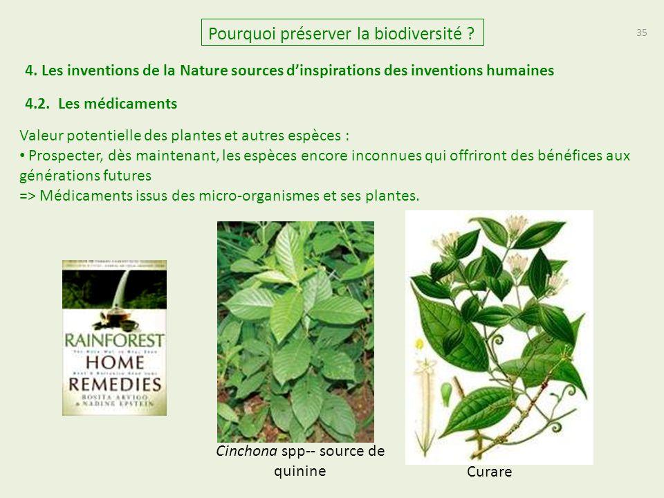 35 Valeur potentielle des plantes et autres espèces : Prospecter, dès maintenant, les espèces encore inconnues qui offriront des bénéfices aux générations futures => Médicaments issus des micro-organismes et ses plantes.