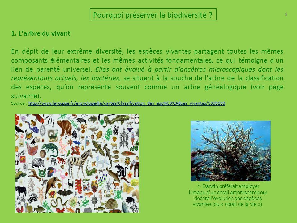8 1. L'arbre du vivant En dépit de leur extrême diversité, les espèces vivantes partagent toutes les mêmes composants élémentaires et les mêmes activi