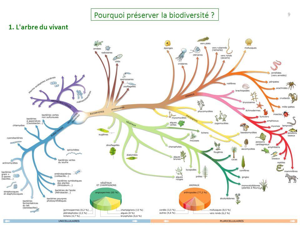 9 9 Pourquoi préserver la biodiversité ? 1. L arbre du vivant