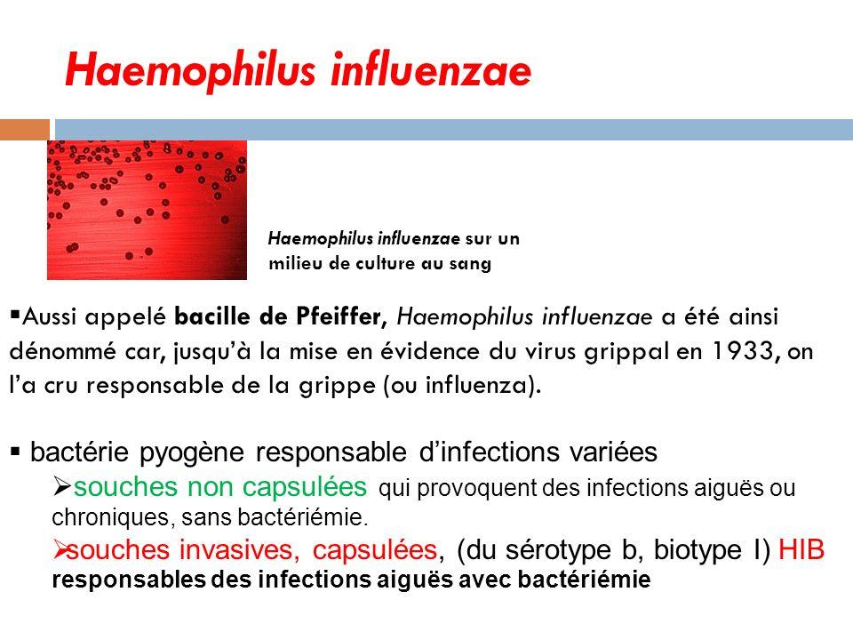 Haemophilus influenzae Haemophilus influenzae sur un milieu de culture au sang Aussi appelé bacille de Pfeiffer, Haemophilus influenzae a été ainsi dénommé car, jusquà la mise en évidence du virus grippal en 1933, on la cru responsable de la grippe (ou influenza).