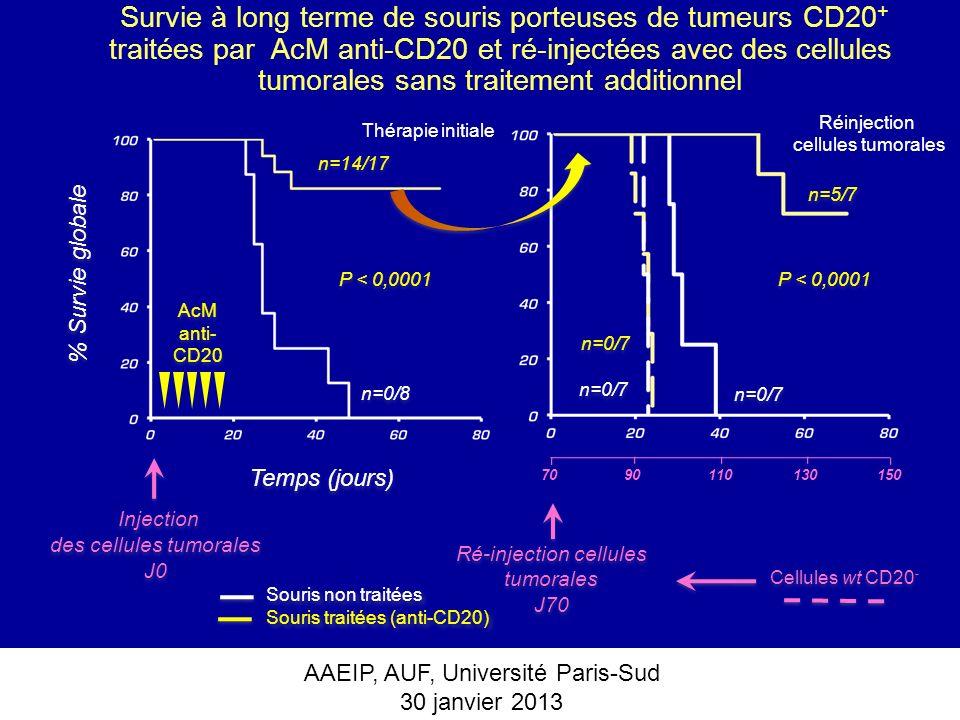 AAEIP, AUF, Université Paris-Sud 30 janvier 2013 Survie à long terme de souris porteuses de tumeurs CD20 + traitées par AcM anti-CD20 et ré-injectées