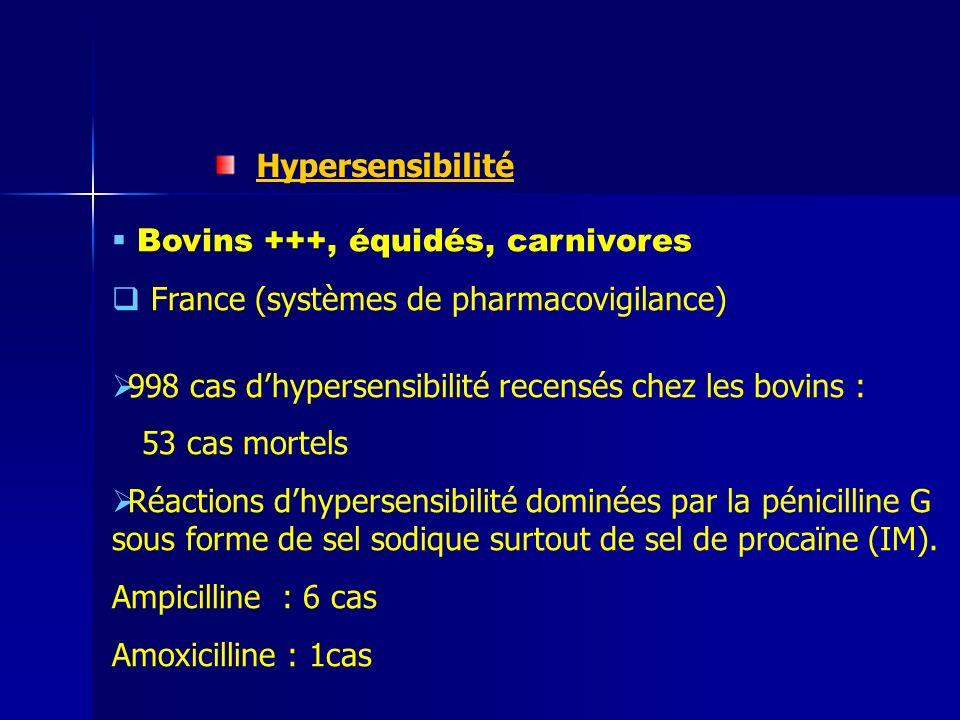 Hypersensibilité Bovins +++, équidés, carnivores France (systèmes de pharmacovigilance) 998 cas dhypersensibilité recensés chez les bovins : 53 cas mortels Réactions dhypersensibilité dominées par la pénicilline G sous forme de sel sodique surtout de sel de procaïne (IM).