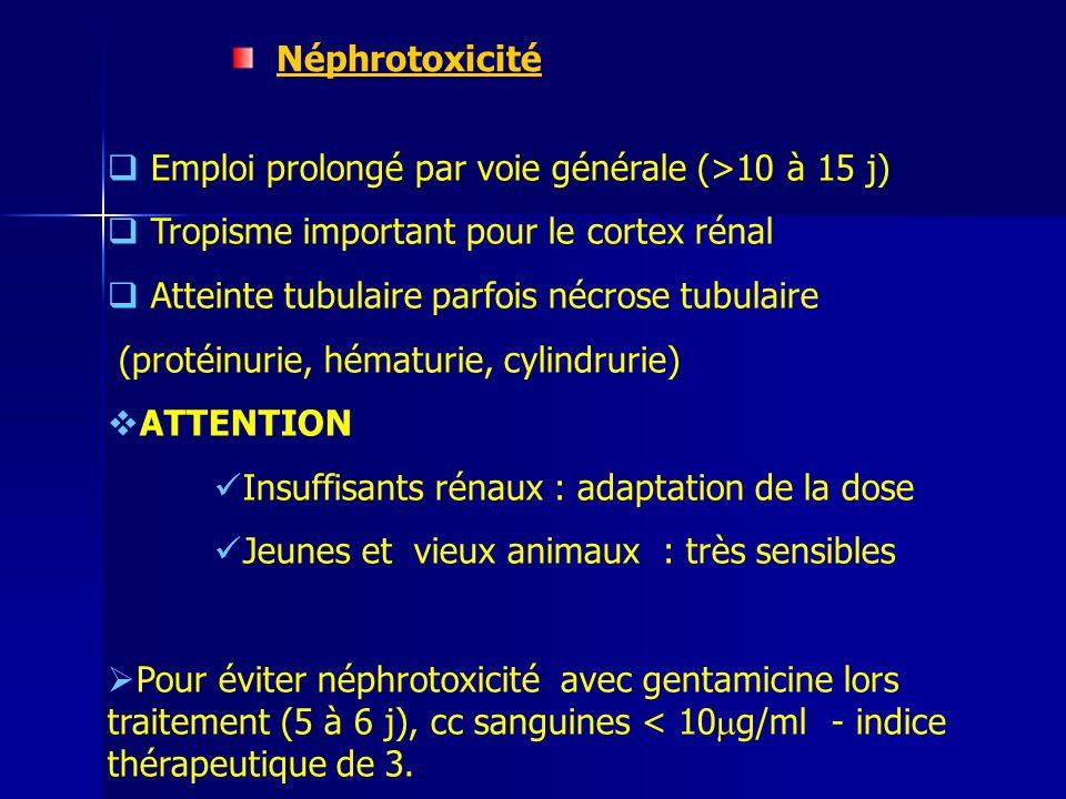 Néphrotoxicité Emploi prolongé par voie générale (>10 à 15 j) Tropisme important pour le cortex rénal Atteinte tubulaire parfois nécrose tubulaire (protéinurie, hématurie, cylindrurie) ATTENTION Insuffisants rénaux : adaptation de la dose Jeunes et vieux animaux : très sensibles Pour éviter néphrotoxicité avec gentamicine lors traitement (5 à 6 j), cc sanguines < 10 g/ml - indice thérapeutique de 3.