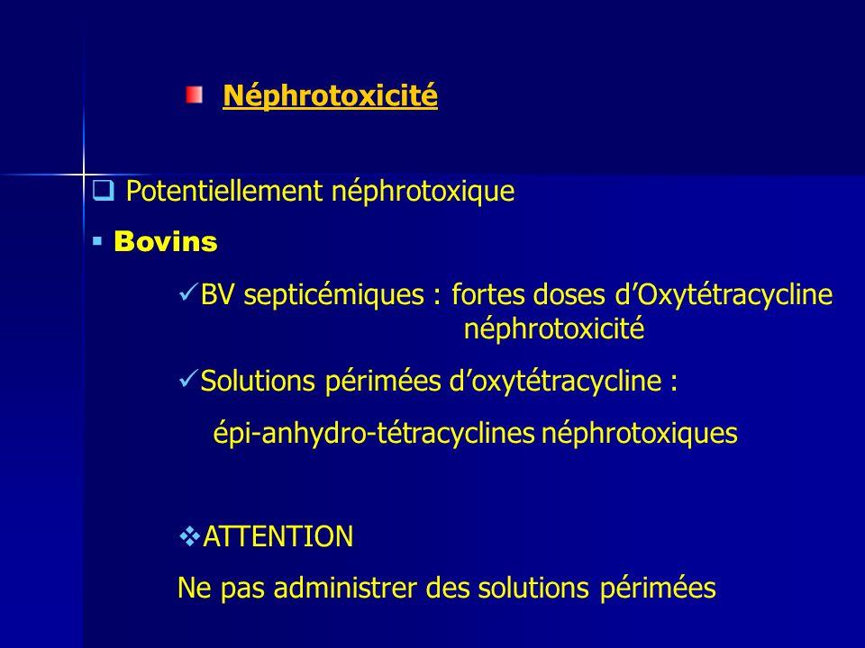 Néphrotoxicité Potentiellement néphrotoxique Bovins BV septicémiques : fortes doses dOxytétracycline néphrotoxicité Solutions périmées doxytétracycline : épi-anhydro-tétracyclines néphrotoxiques ATTENTION Ne pas administrer des solutions périmées