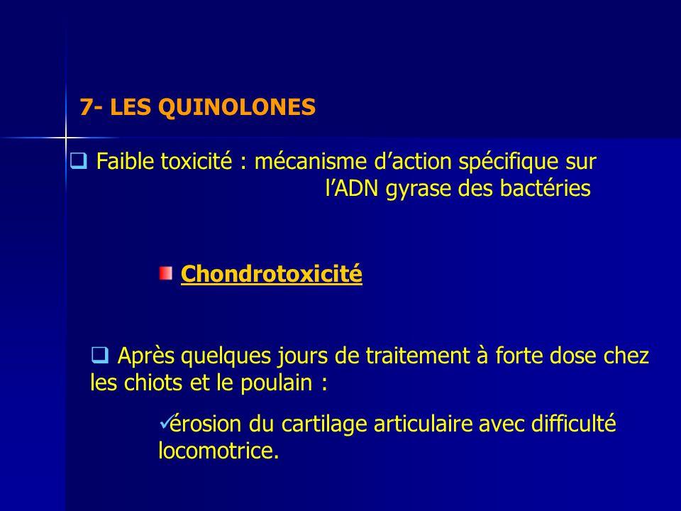 7- LES QUINOLONES Faible toxicité : mécanisme daction spécifique sur lADN gyrase des bactéries Chondrotoxicité Après quelques jours de traitement à forte dose chez les chiots et le poulain : érosion du cartilage articulaire avec difficulté locomotrice.