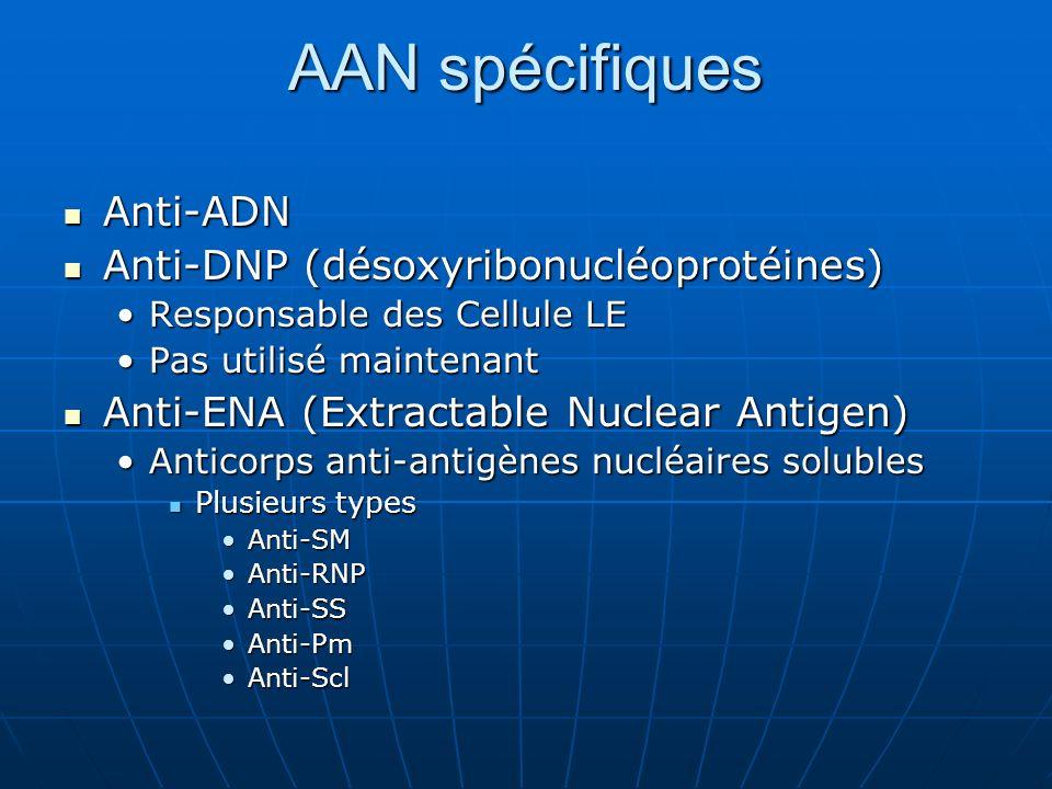 AAN spécifiques Anti-ADN Anti-ADN Anti-DNP (désoxyribonucléoprotéines) Anti-DNP (désoxyribonucléoprotéines) Responsable des Cellule LEResponsable des