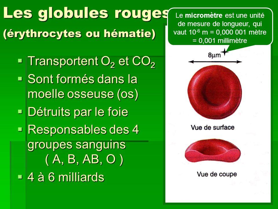 Les globules blancs (leucocytes) Système immunitaire (défense de lorganisme) Système immunitaire (défense de lorganisme) Produisent des anticorps (contre antigène = ennemi) Produisent des anticorps (contre antigène = ennemi) Produits dans la moelle osseuse Produits dans la moelle osseuse 4 à 11 millions 4 à 11 millions
