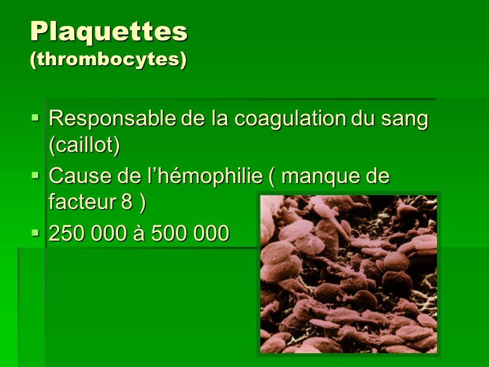 Plaquettes (thrombocytes) Responsable de la coagulation du sang (caillot) Responsable de la coagulation du sang (caillot) Cause de lhémophilie ( manqu