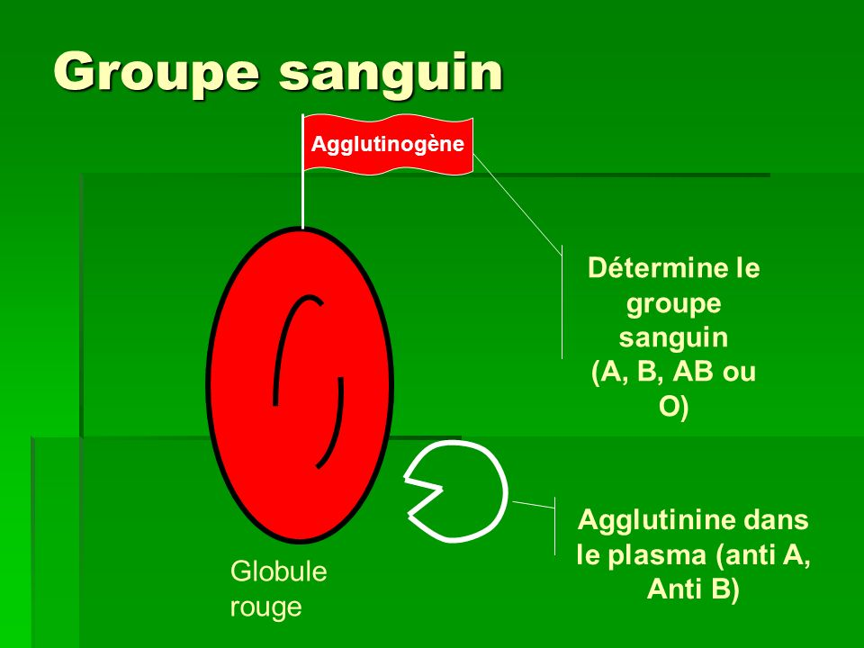 Groupe sanguin Globule rouge Agglutinogène Détermine le groupe sanguin (A, B, AB ou O) Agglutinine dans le plasma (anti A, Anti B)