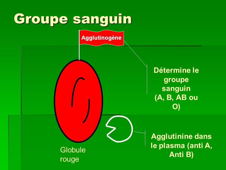 Les 4 groupes sanguins Anti - B B A AB O A A B B Anti - A Anti - B