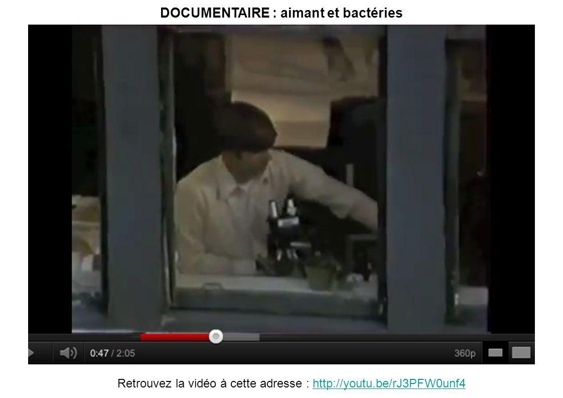DOCUMENTAIRE : aimant et bactéries Retrouvez la vidéo à cette adresse : http://youtu.be/rJ3PFW0unf4http://youtu.be/rJ3PFW0unf4