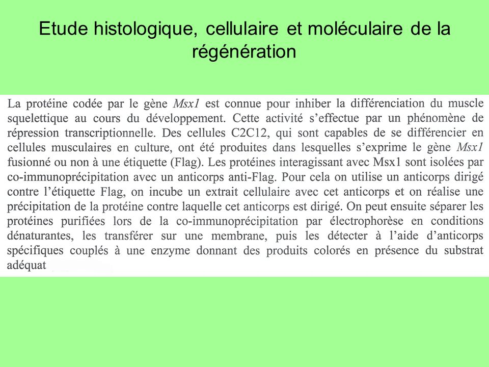 Correction document A, pré-requis : lhistone H1 est nécessaire à linhibition de la différenciation des cellules musculaires colonnes 3 et 6 : lARNi H1 inhibe lexpression de H1 de 50% ; la diminution de la quantité de H1 supprime la capacité de Msx1 à inhiber la différenciation des cellules musculaires colonne 6 : la coexpression de Msx1 et de lARNi H1 entraîne une réduction de la production de H1 et donc une réduction de linhibition de la différenciation des cellules musculaires alors que… colonne 5 : … la coexpression de Msx1 et de lARNi contrôle ne conduit à aucune diminution de la production de H1, ce qui permet la normale différenciation des cellules musculaires…