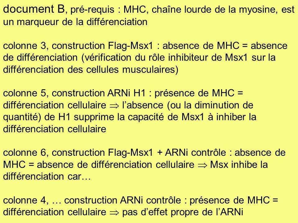 document B, pré-requis : MHC, chaîne lourde de la myosine, est un marqueur de la différenciation colonne 3, construction Flag-Msx1 : absence de MHC =