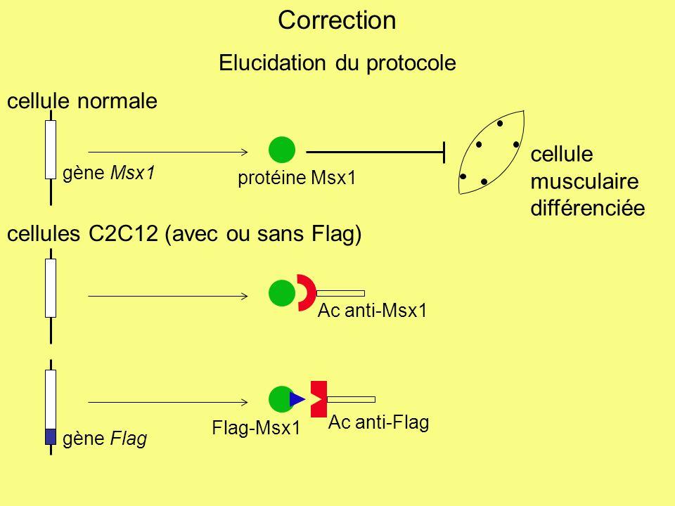 document B, pré-requis : MHC, chaîne lourde de la myosine, est un marqueur de la différenciation colonne 3, construction Flag-Msx1 : absence de MHC = absence de différenciation (vérification du rôle inhibiteur de Msx1 sur la différenciation des cellules musculaires) colonne 5, construction ARNi H1 : présence de MHC = différenciation cellulaire labsence (ou la diminution de quantité) de H1 supprime la capacité de Msx1 à inhiber la différenciation cellulaire colonne 6, construction Flag-Msx1 + ARNi contrôle : absence de MHC = absence de différenciation cellulaire Msx inhibe la différenciation car… colonne 4, … construction ARNi contrôle : présence de MHC = différenciation cellulaire pas deffet propre de lARNi