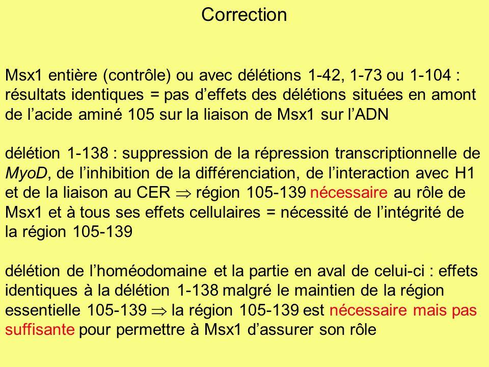 Msx1-A (séquence des acides aminés de lhoméodomaine modifiée) : suppression de la répression transcriptionnelle de MyoD, de linhibition de la différenciation et de la liaison au CER mais maintien de linteraction avec H1 interaction entre Msx1 et H1 nécessaire mais pas suffisante pour la liaison au CER, la répression transcriptionnelle de MyoD et linhibition de la différenciation 2 domaines de Msx1 sont nécessaires à la liaison de Msx1 à lADN : - la région 105-139 qui permet la liaison au CER - lhoméodomaine qui lie lADN grâce à lhistone H1