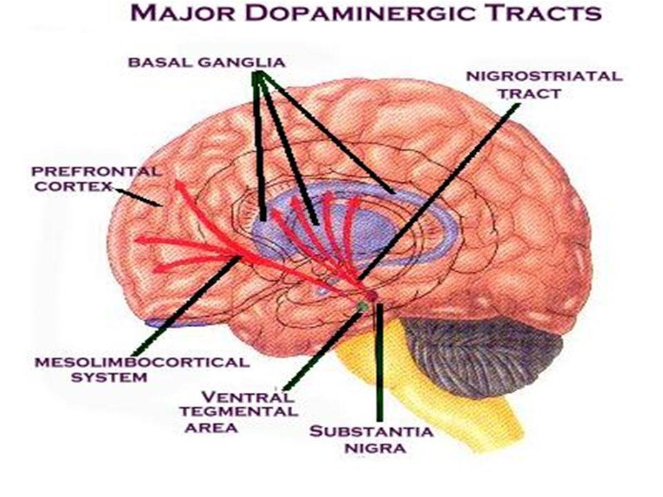Effets pharmacologiques des NRL En rapport avec le blocage dopaminergique D2 au niveau méso-limbique : le contrôle des symptômes positifs au niveau meso-cortical: production de symptômes négatifs de la schizophrénie, troubles cognitifs au niveau nigro-strié : akinésie, tremblements, dyskinésies précoces ou tardives au niveau hypothalamo-hypophysaire: augmentation de la prolactine à l origine de galactorrhée et aménorrhée