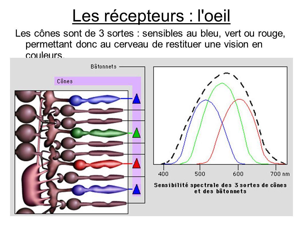 Les récepteurs : l'oeil Les cônes sont de 3 sortes : sensibles au bleu, vert ou rouge, permettant donc au cerveau de restituer une vision en couleurs.