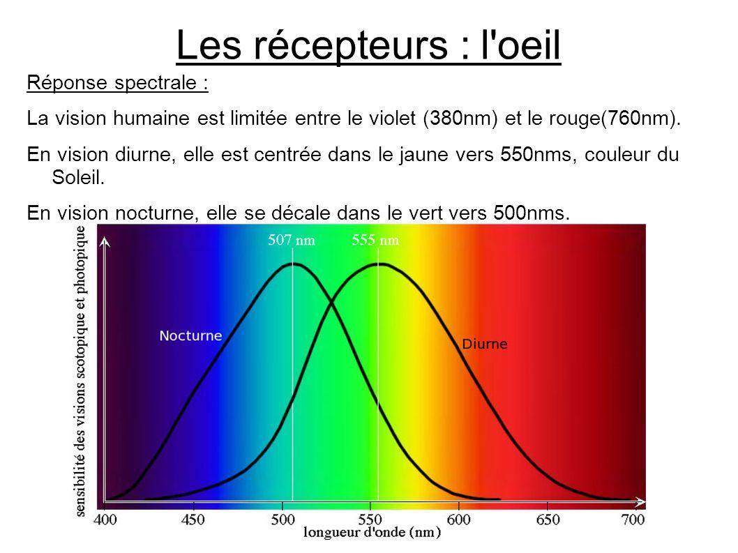 Les récepteurs : l'oeil Réponse spectrale : La vision humaine est limitée entre le violet (380nm) et le rouge(760nm). En vision diurne, elle est centr