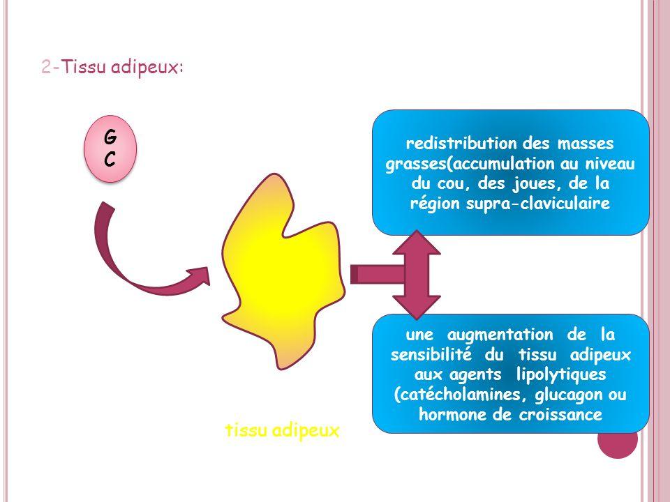 E FFETS DES GLUCOCORTICOÏDES a) Effets métaboliques: sexercent dans différents organes : 1-Foie: Glucose le foie GCGC GCGC enzymes impliquées dans la néogluco- et la néo- glycogénèse acides aminés +glycérol