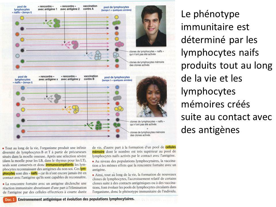 Le phénotype immunitaire est déterminé par les lymphocytes naifs produits tout au long de la vie et les lymphocytes mémoires créés suite au contact av