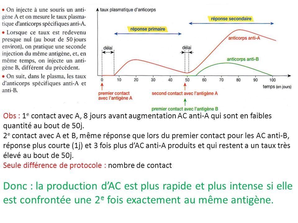 Obs : 1 e contact avec A, 8 jours avant augmentation AC anti-A qui sont en faibles quantité au bout de 50j. 2 e contact avec A et B, même réponse que