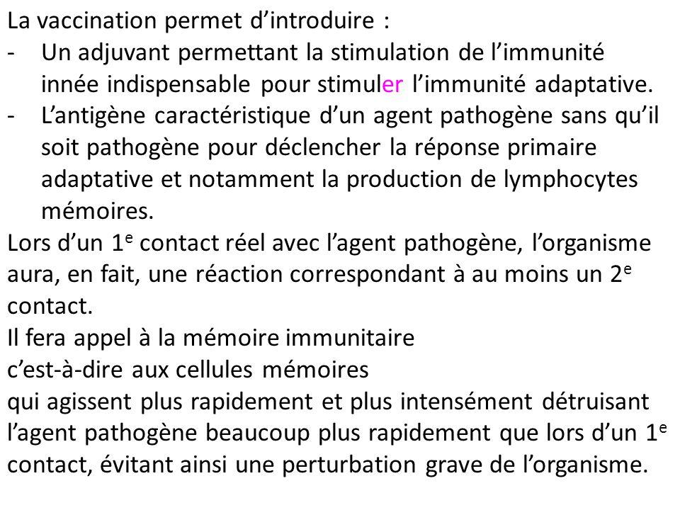 La vaccination permet dintroduire : -Un adjuvant permettant la stimulation de limmunité innée indispensable pour stimuler limmunité adaptative. -Lanti