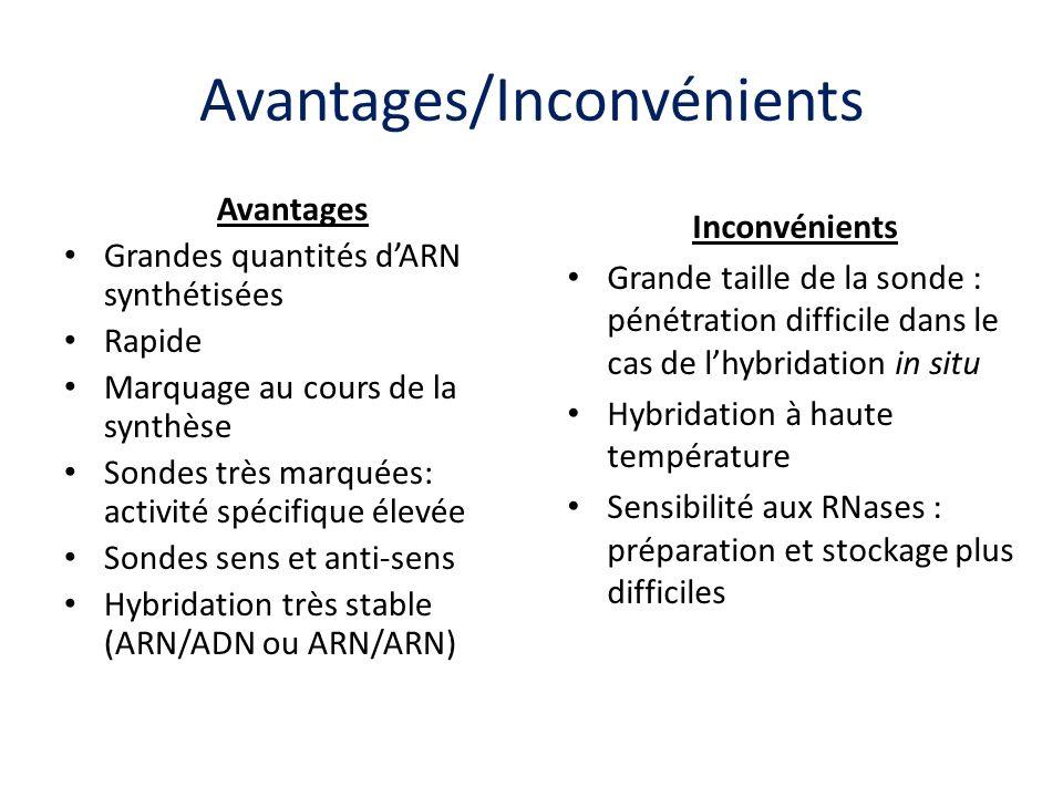Avantages/Inconvénients Avantages Grandes quantités dARN synthétisées Rapide Marquage au cours de la synthèse Sondes très marquées: activité spécifiqu