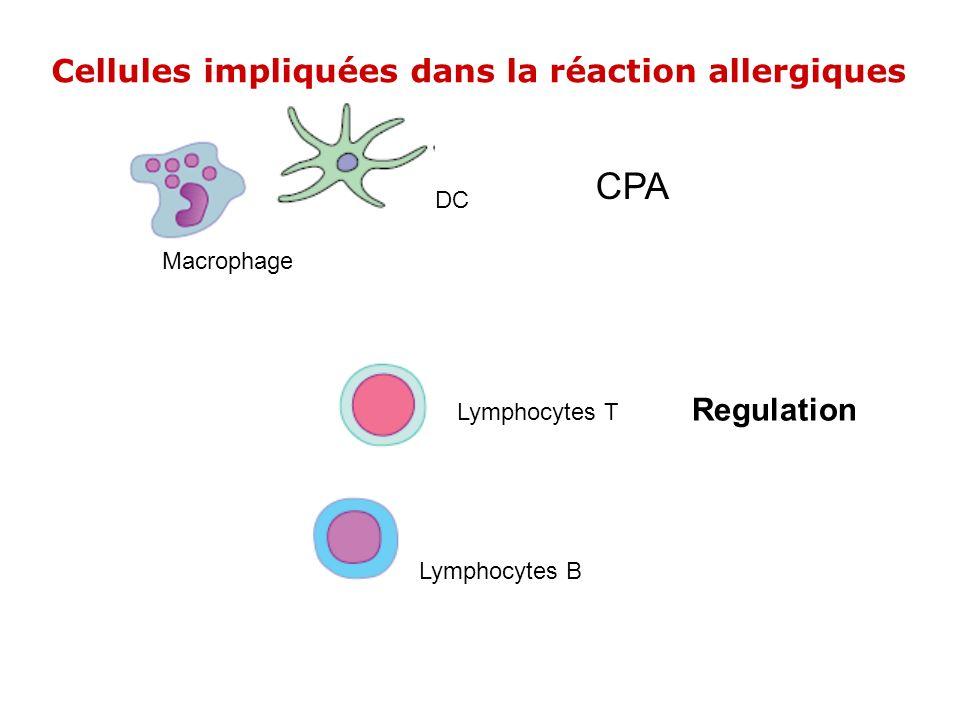 Macrophage DC CPA Lymphocytes T Regulation Lymphocytes B Cellules impliquées dans la réaction allergiques