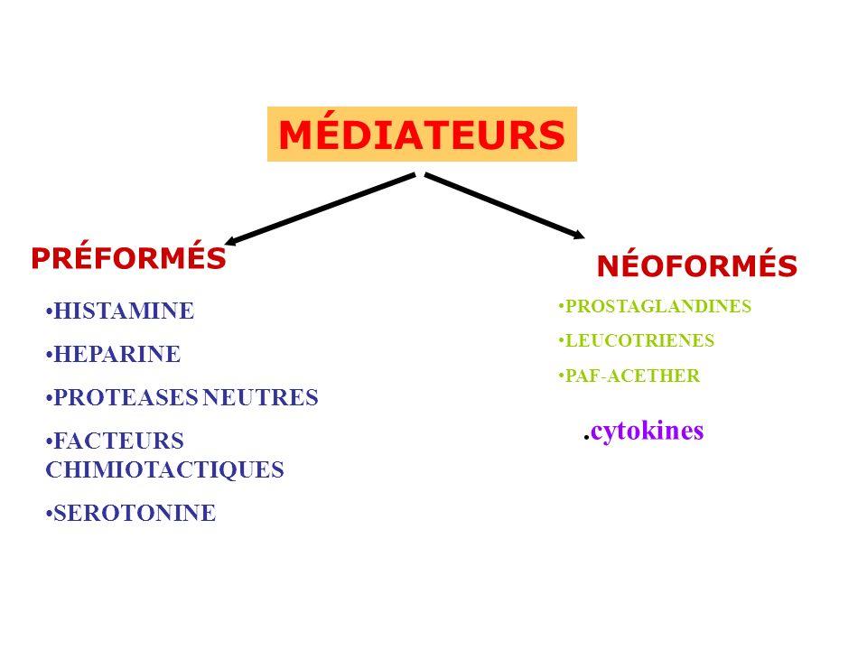 HISTAMINE HEPARINE PROTEASES NEUTRES FACTEURS CHIMIOTACTIQUES SEROTONINE NÉOFORMÉS PROSTAGLANDINES LEUCOTRIENES PAF-ACETHER MÉDIATEURS PRÉFORMÉS.cytok