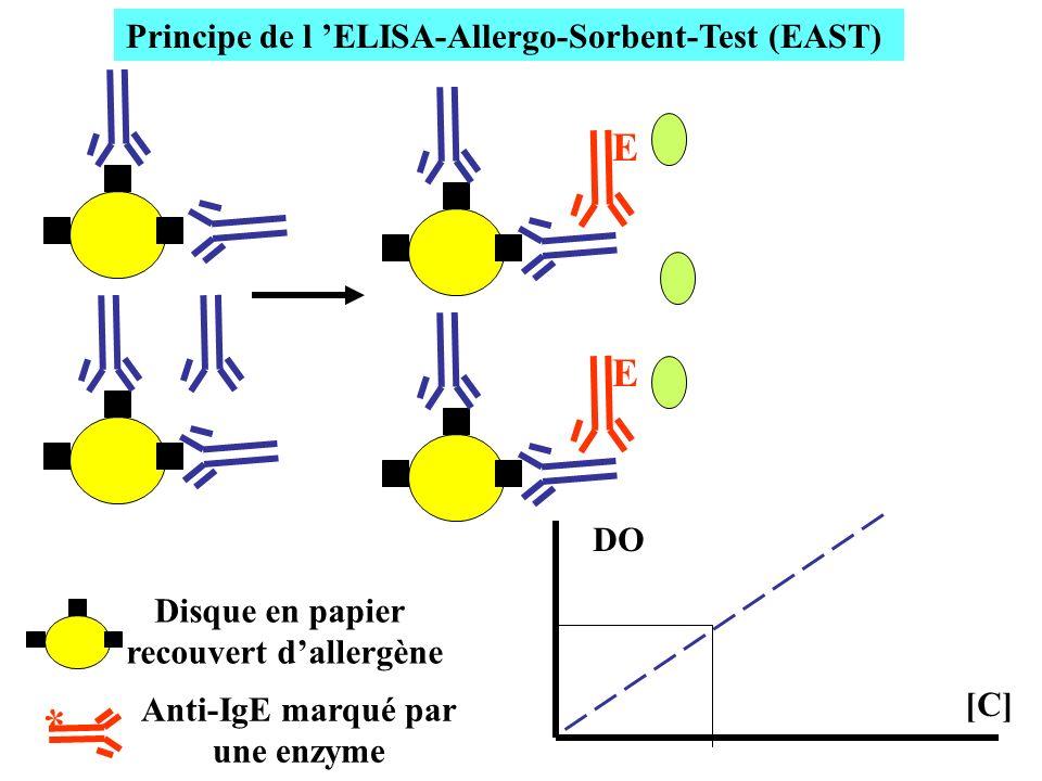 [C] Principe de l ELISA-Allergo-Sorbent-Test (EAST) E E DO * Disque en papier recouvert dallergène Anti-IgE marqué par une enzyme