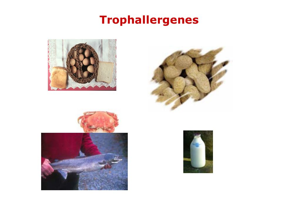 Trophallergenes