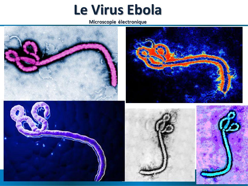Maladie à virus Ebola en Afrique de lOuest – OCHA- 17 avril 2014 Virus Ebola Bonne nouvelle : il est facile à détruire – Chaleur (30 minutes à 60 °C) – Lumière, soleil – Javel, détergents, poudre à lessive – Savon et eau – Le virus ne survit pas dans leau, dans lair