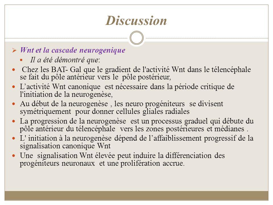 Discussion Wnt et la cascade neurogenique Il a été démontré que: Chez les BAT- Gal que le gradient de l'activité Wnt dans le télencéphale se fait du p
