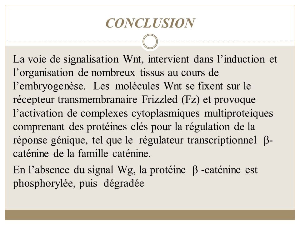 CONCLUSION La voie de signalisation Wnt, intervient dans linduction et lorganisation de nombreux tissus au cours de lembryogenèse. Les molécules Wnt s